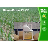 Quality White Crystalline Or Powder Post Emergence Select Herbicide Nicosulfuron 4% OF wholesale