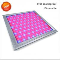 Quality 110V Led Full Spectrum Grow Lights , Led Flowering Grow Lights Energy Saving wholesale