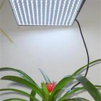 China 15w led plant grow light with ce & rohs approval on sale