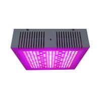 Cheap Osunby 600W Dimmable LED Grow Lights Full Spectrum for Indoor Greenhouse Plants for sale