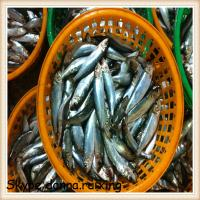 Quality sardine canned fish sardines for canning wholesale