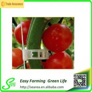 Quality tomato trellis clip clip for tomato tomato grafting clips,tomato trellis clip clip for tomato tomato grafting clips wholesale