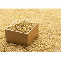 Buy cheap Organic Soybean Extract Powder 40% Isoflavones to improve brain function and from wholesalers