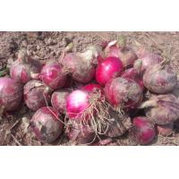 Quality Red Natural Fresh Onion Anti-Cholesterol For Grilling And Char-Broiling, Flat spherical or spherical wholesale