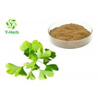 Quality Dried Ginkgo Biloba Leaf Extract Powder Water Soluble Flavones 24% Lactones 6% wholesale