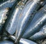 Quality China Wholesale Price BQF 10KG/CTN Frozen WR Sardine Fish for Sale. wholesale