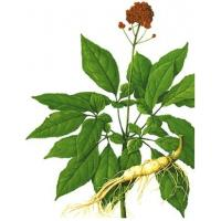 Quality Ginseng P.E. Ginsenosides 80% enhance immunity , benefit the spleen and lung, wholesale