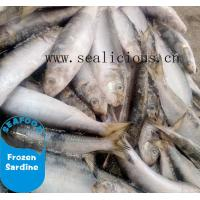 Quality New stock bqf frozen fish sardine whole round with competitive price wholesale