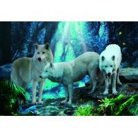 Quality Pet / Pvc / PP Wolf Animal Photos Lenticular 3d Posters For Store Eco - Friendly wholesale