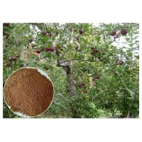 Quality anti-bacterial Phloridizin Apple Tree Root & Bark Extract for dietary supplement wholesale