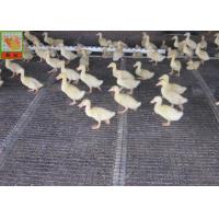 Quality Heavy Duty Breeding Nets , Plastic Poultry Netting , HDPE Materilas , Black Color , Strong Poultry Fence wholesale