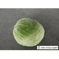China Affordable Raw Cabbage , Folic Acid And Potassium Cabbage Family Vegetables on sale