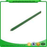 Quality Green Steel Garden Stakes PE Plastic Coated 8mm Diameter , 60cm Length  Plant support Steel with plastic coated wholesale