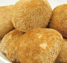 China Lions mane mushroom extract 20%,4:1  Stimulated nerve,myelination and animal nerve system on sale