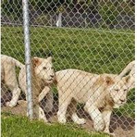 Quality RAL6005 PVC Coated Fence wire, Animal Fence or Animal protection wholesale