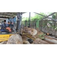 Quality Automatic vertical band sawmill with CNC carriage wood cutting machine wholesale