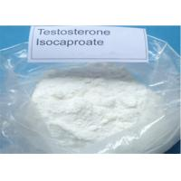 Anabolic Steroid Powder Testosterone Isocaproate CAS 15262-86-9 for Bodybuilding