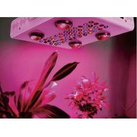 Quality Nouveaux Products Noah 8S 6S 4S 1200W 1000W 600W LED Plant Grow Lights for Indoor Greenhouse wholesale