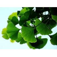 Buy cheap natural high quality cosmetic and pharmaceutical used Ginkgo Biloba Extract 24/6 from wholesalers
