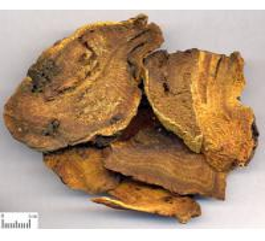 Quality Rhubarb Root P.E.  RHB-Anthraquinones 50% UV;10:1 wholesale