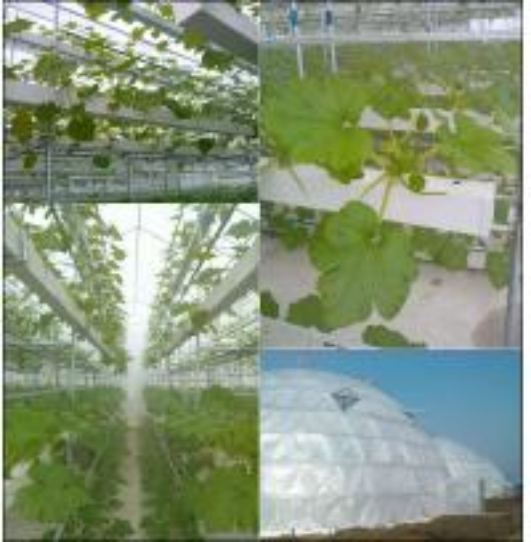 PVC gutter hydroponics
