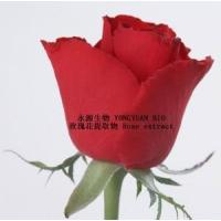 Quality Rose extract  delay aging and compact skin 10:1  Rose Polyphenol wholesale