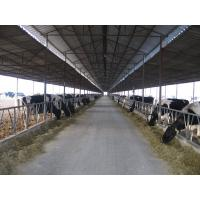 China Pre-engineered Steel Framing Systems Breeding Cow / Horse With Roof Panels on sale