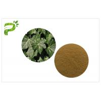 Quality Hedera Helix Hederacoside Plant Extract Powder Ivy Leaf Extract Treat Cough And Cold wholesale