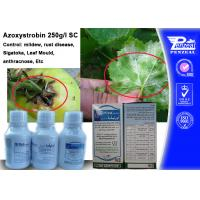 Quality Azoxystribin 250% SC Systemic Fungicides Control Pathogens 131860-33-8 wholesale