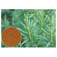 Quality Cosmetic Rosemary Antioxidant Extract , Rosemary Extract Powder CAS 20283 95 5 wholesale