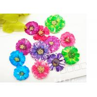 Quality Small Daisy Natural Real Pressed Flowers True Plants Specimens For DIY Photo Frame wholesale