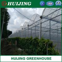 Quality Reinforced Plastic Film Wide Multi Span Greenhouse / Green Houses wholesale