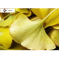 China 6% Lactones Medical Grade Ginkgo Biloba Extract on sale