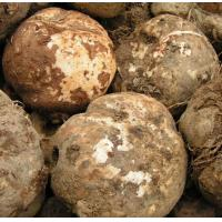 Quality High quality 60%95% Konjac Extract, Amorphophalms konjac K Koch. wholesale