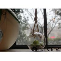 Quality Clear Glass Hanging Terrarium / Hanging Glass Plant Holders Anti Corrosion wholesale
