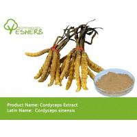 Buy cheap wholesale Chinese cordyceps extract polysaccharide 50% with best price free sample product