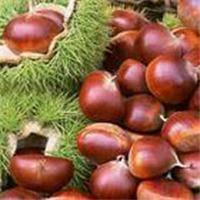 Buy cheap Chestnut,Peanut in Shell,Peanut,Peanut Kernel from wholesalers