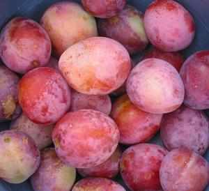 Quality Plum Extract  fruit vegatable powder wholesale