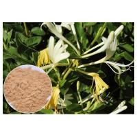 Quality Anti-bacterial Chlorogenic acid 5% Honeysuckle Flower Extract powder wholesale