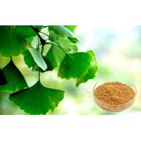Quality Pharmaceutical Grade Ginkgo Biloba Extract For Health Care Products wholesale