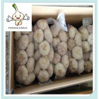 Quality 2015 new crop of the garlic come into market Hot sale New fresh chinese garlic wholesale