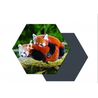 China Hot Sell Manufacture High Quality Customized Promotional 3d lenticular printing fridge magnet on sale