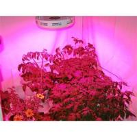 LED grow light (UFO)