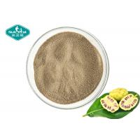 Quality Dry Place Storage Noni Fruit Powder , Noni Juice Powder For Healthy Body Weight wholesale