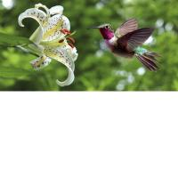 Cheap 3D Lenticular Picture/Image / Bird & Flower / 3D Lenticular Printing for sale