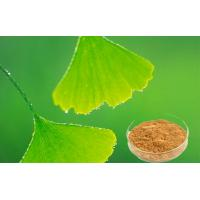 China Natural Ginkgo Biloba Leaf Extract For Improving Mental Performance CHP2015 on sale