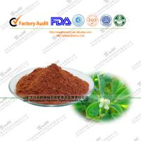 China 100% natural Fenugreek Seed extract  saponins 10%-70% for male sex on sale