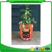 Quality Outdoor Garden Plant Accessories , Classic Line Tequila Sunrise Fabric Planter garden bags wholesale