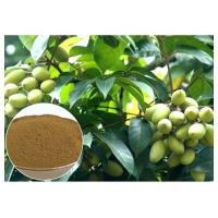 Quality Oleuropein Natural Olive Leaf Extract Natural Ingredient With HPLC Test wholesale