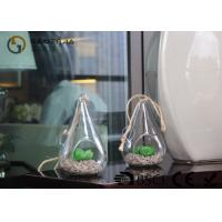 Quality Glass Plant Holders / Glass Plant Terrarium For Indoor Decoration wholesale